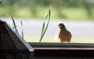 Robin-window