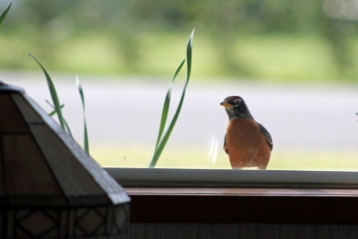 Robin-window
