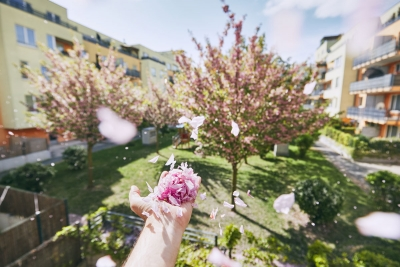 blowing-flower-petals