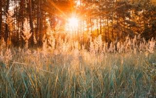 sunset-or-sunrise-in-autumn-forest-sun-shining